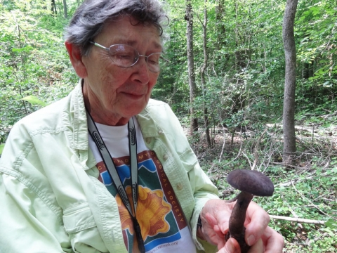 During a recent hike Allein Stanley finds a bolete, Tylopilus alboater, that she's seen only in books. Photo: Amber Veverka