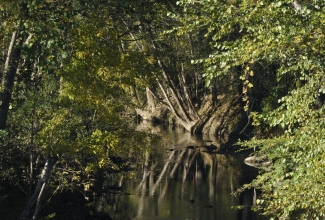Tree-lined banks of Irwin Creek. Photo: Nancy Pierce