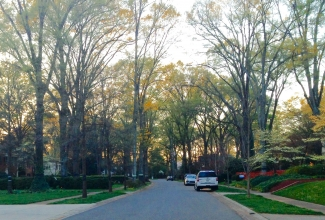 A street in Myers Park neighborhood. Photo: David Walters