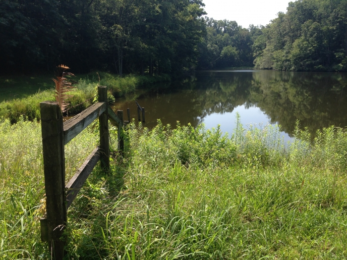 Pond in west Mecklenburg, owned by Sue Friday. Photo: Mary Newsom