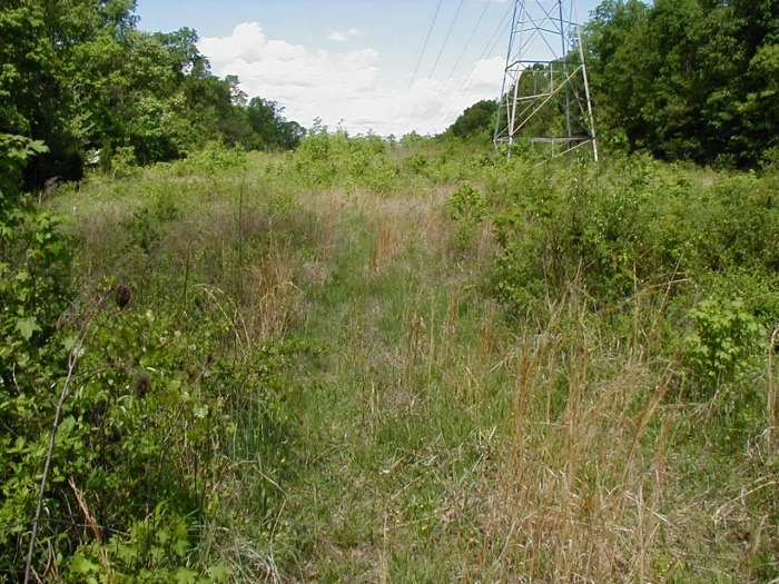 The Shuffletown prairie sits under power lines in northwestern Mecklenburg County. Photo: Mecklenburg County Park and Recreation