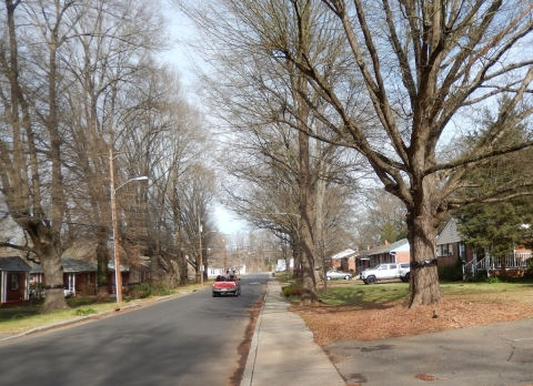 Grier Heights with street trees and cankerworm bands. Photo: Mae Israel