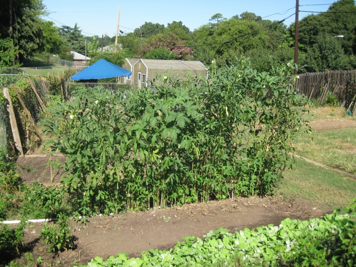 Wilmore's community garden soon will be joined by a grant-funded walkway of berry bushes and fruit trees. Photo: John Chesser
